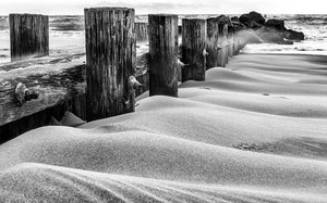Folly Beach Dunes in B&W