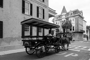 Charleston Carriage Horse