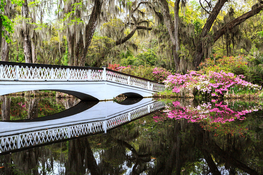 Magnolia Plantation Gardens Long White Bridge