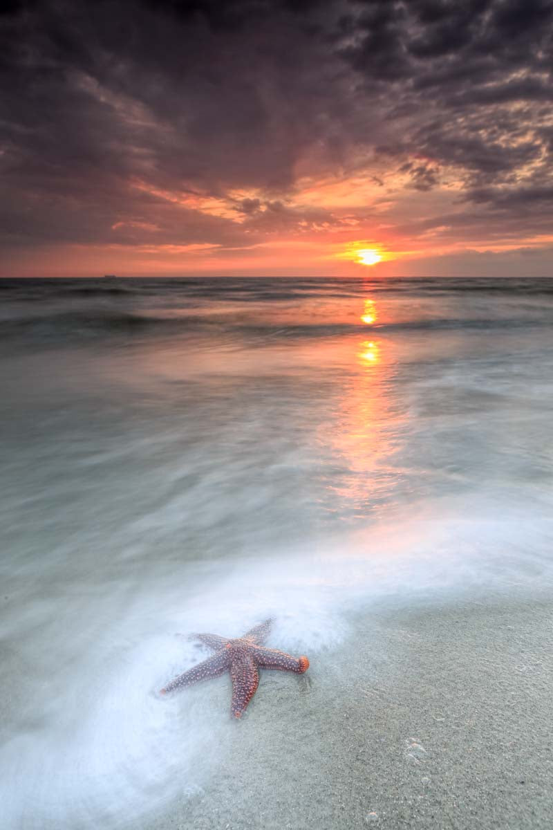 Star Fish Sunrise II