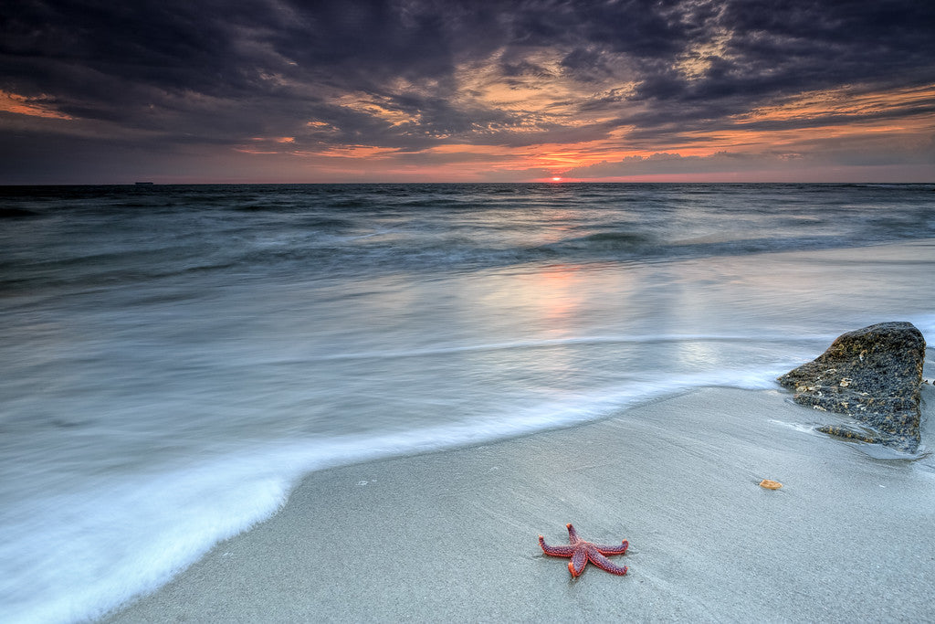 Star Fish Sunrise