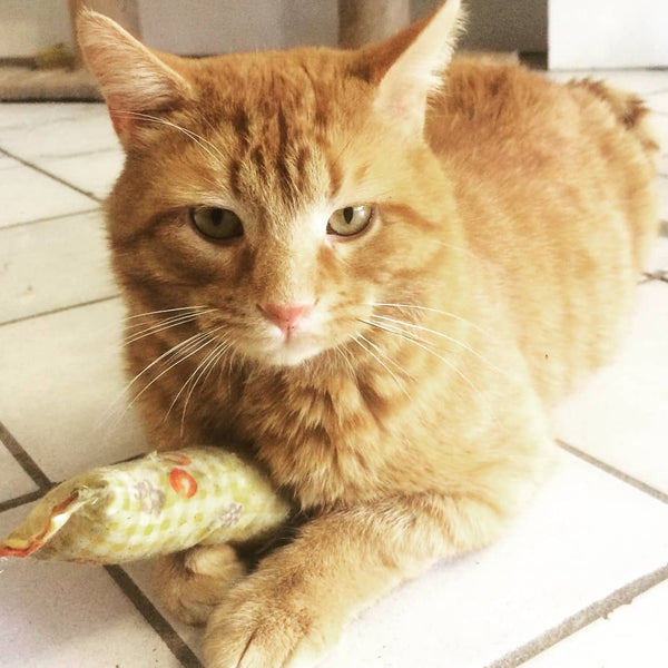Cheddar Adoption Update