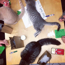 Cat Toy Making Workshop