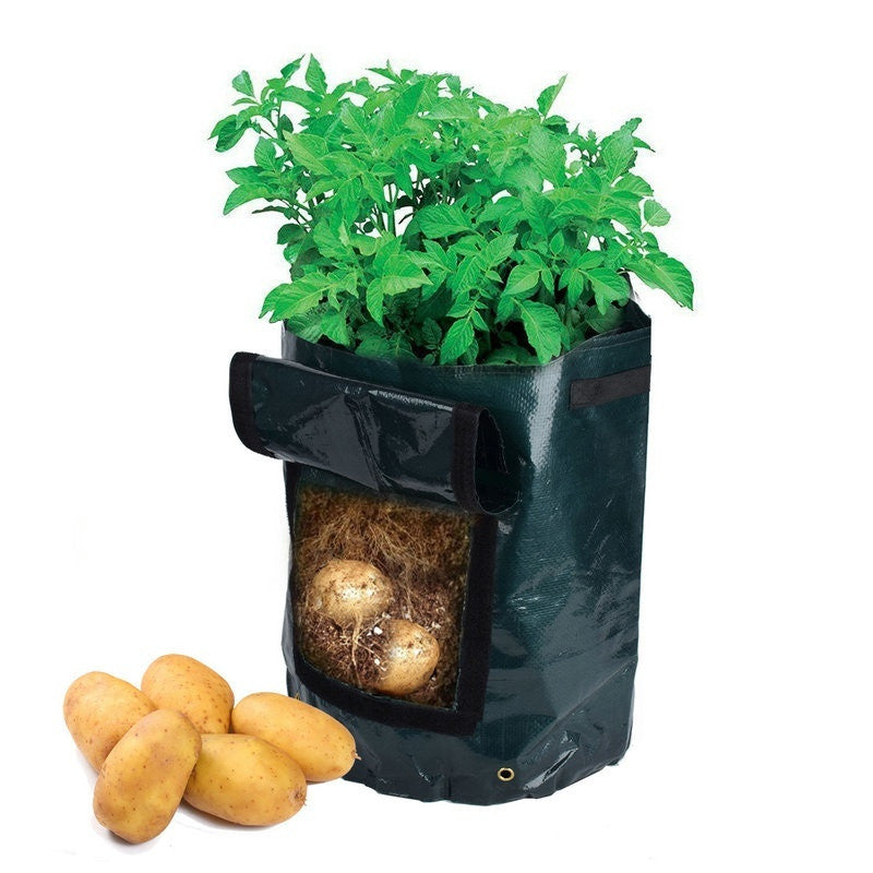 Eco-Friendly Vegetable Planter