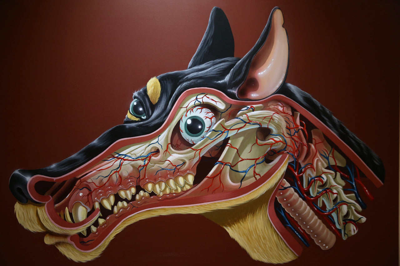 Nychos: German Jagdt Terrier Head Dissection