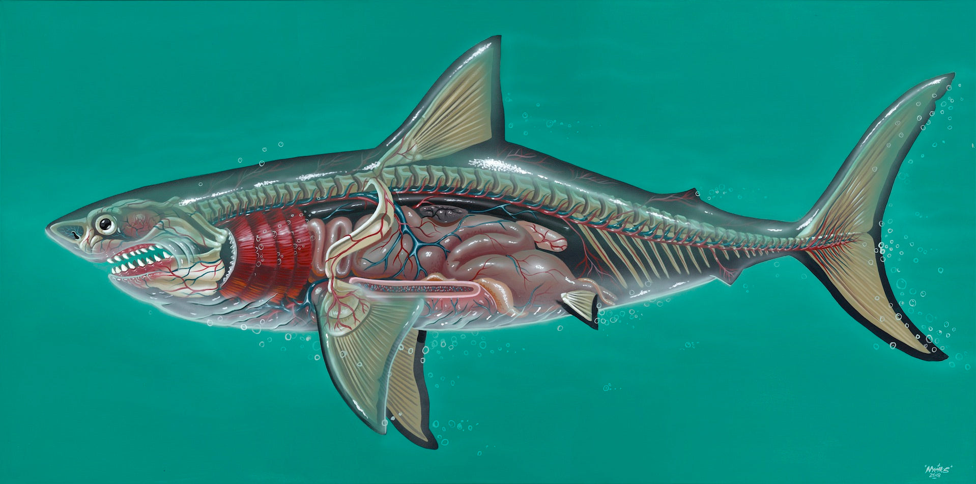 Nychos: Translucent Great White Shark