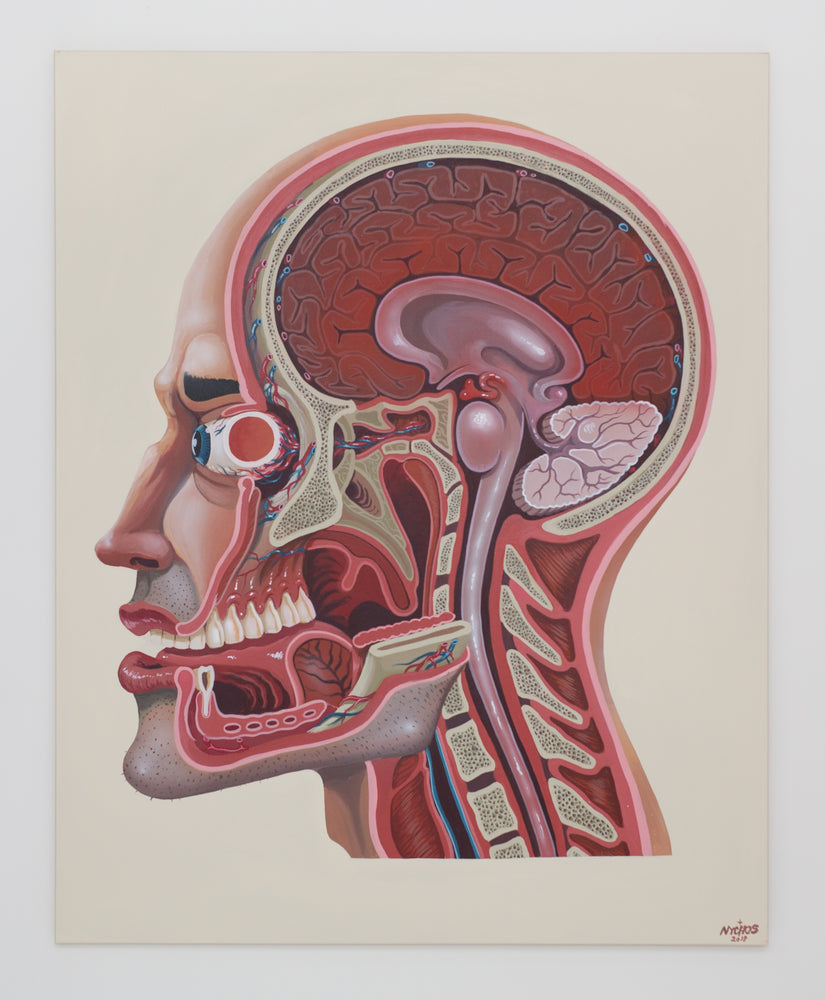 Nychos: Cross Section of a Head