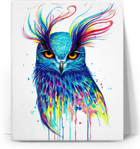 Owl Colors Canvas