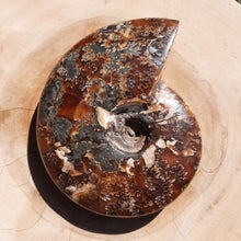 Load image into Gallery viewer, Ammonite Shell ~ Medium