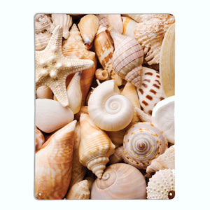 Shells Magnetic Notice Board