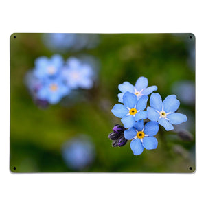 'Forget-me-not' - Large Magnetic Notice Board / Wall Art