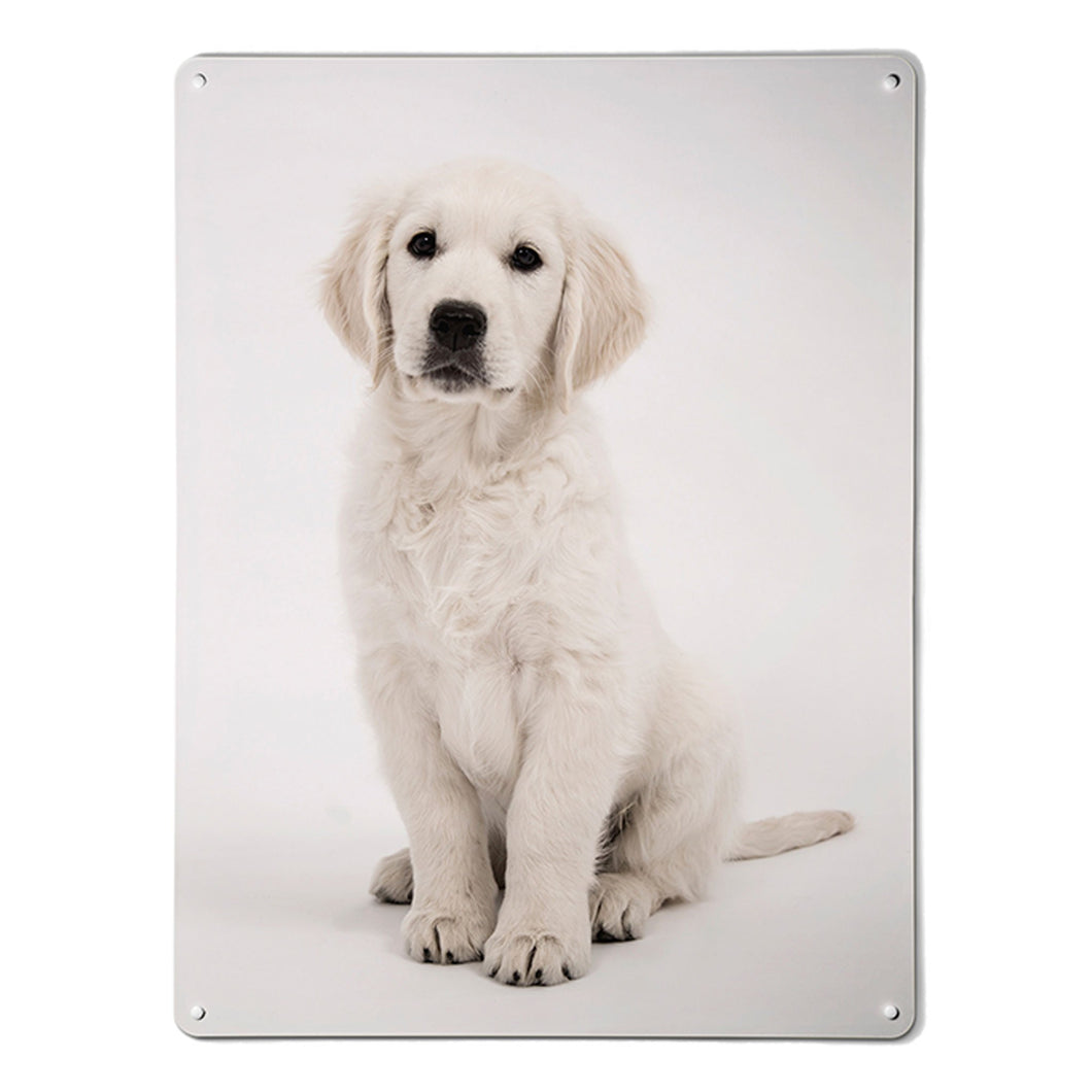 'Golden Retriever Puppy' - Large Magnetic Notice Board / Wall Art