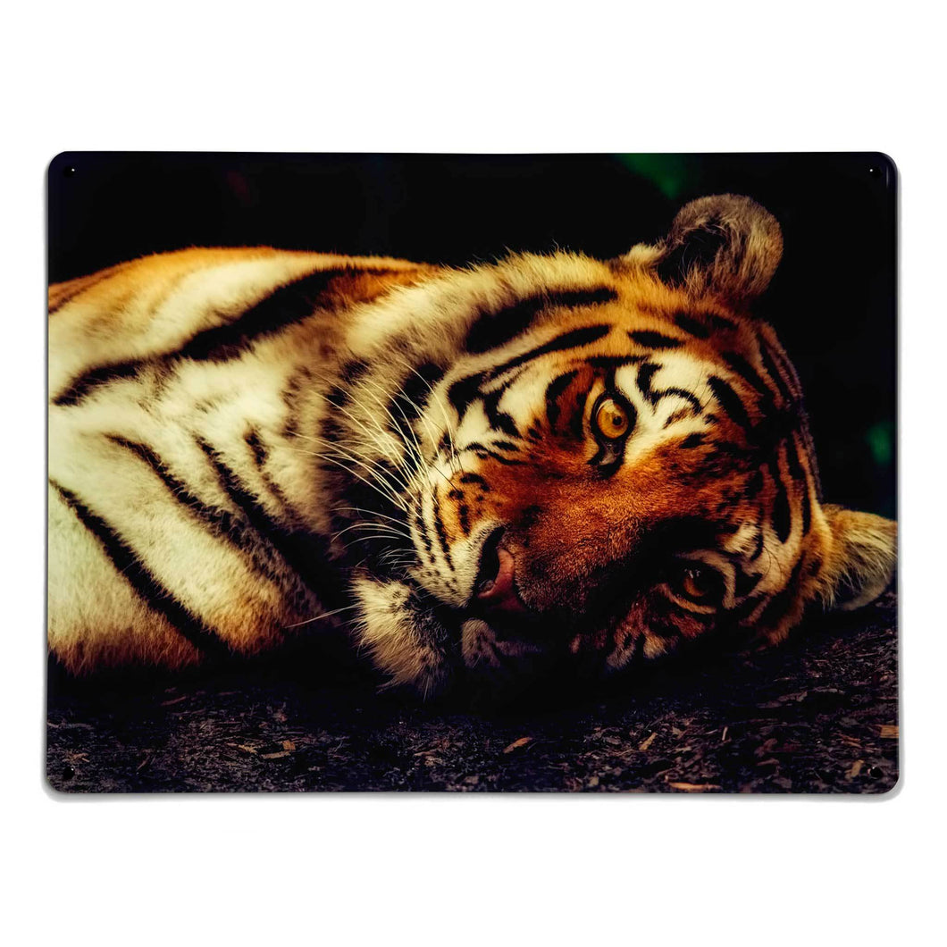 'Tiger' - Large Magnetic Notice Board / Wall Art