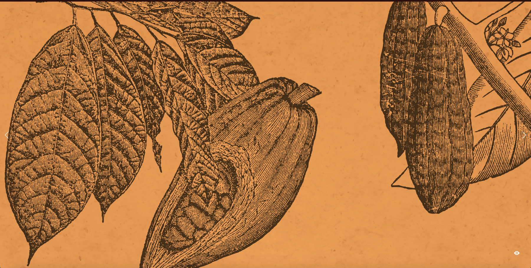 Vintage sketch of cacao beans growing on a branch on an orange background