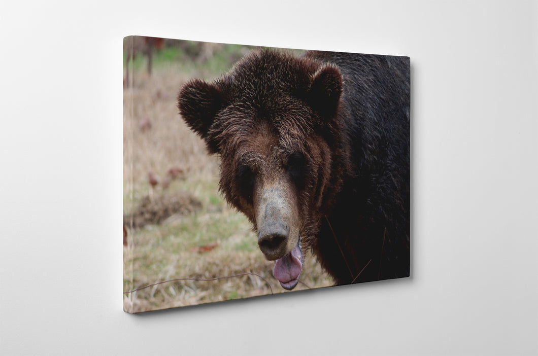 Gallery Wrap Artwork : Print of Original Photography on Canvas - 0011