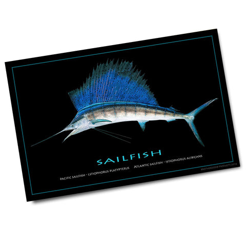 Sailfish Poster (11 x 17)