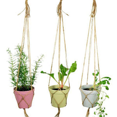 three hanging plant pots with herbs
