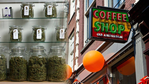 weed in amsterdam