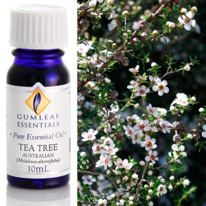 TEA TREE AUSTRALIAN PURE ESSENTIAL OIL
