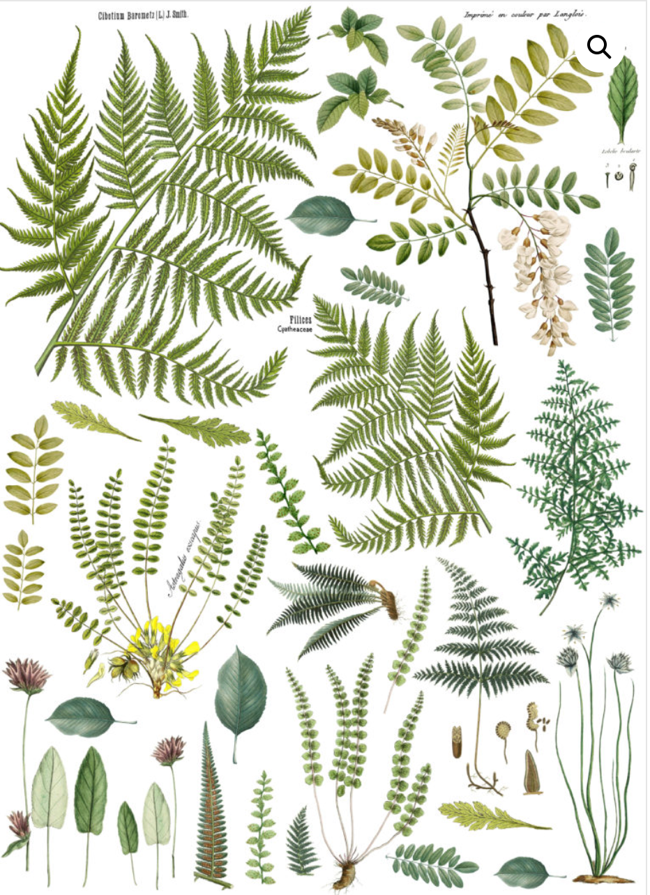 FRONDS BOTANICAL 24×33 DECOR TRANSFER™ - The Weathered Shed