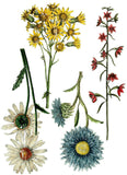 Wild Flower Botanicals 24x33 Decor Transfer™