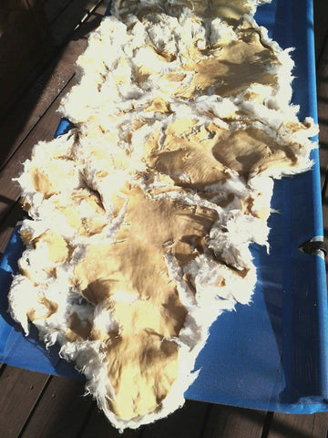 Old sheepskin that fell apart when washed