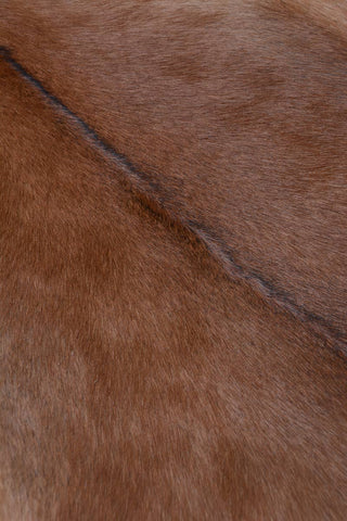 Image of 003 Natural Goat Skin XL - Tan with Black Spine