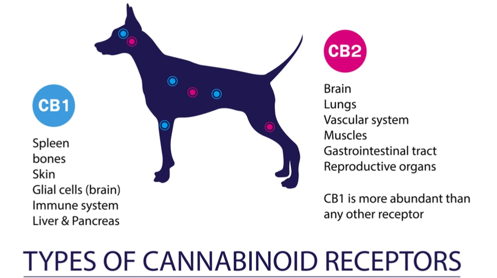CBD Oil for Dogs: A Game-Changer in Canine Health