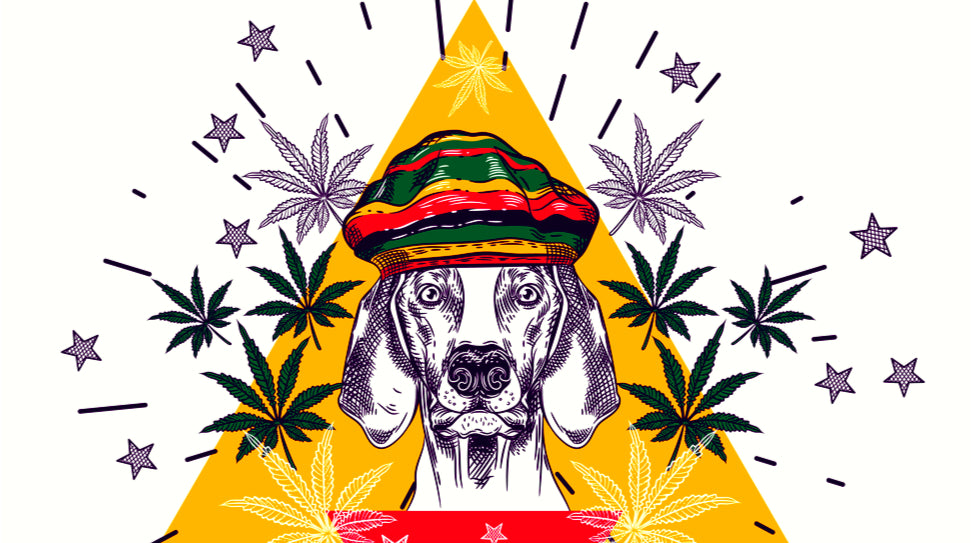 EurekAlert! Science News: CBD clinical trial results on seizure frequency in dogs 'encouraging' |
