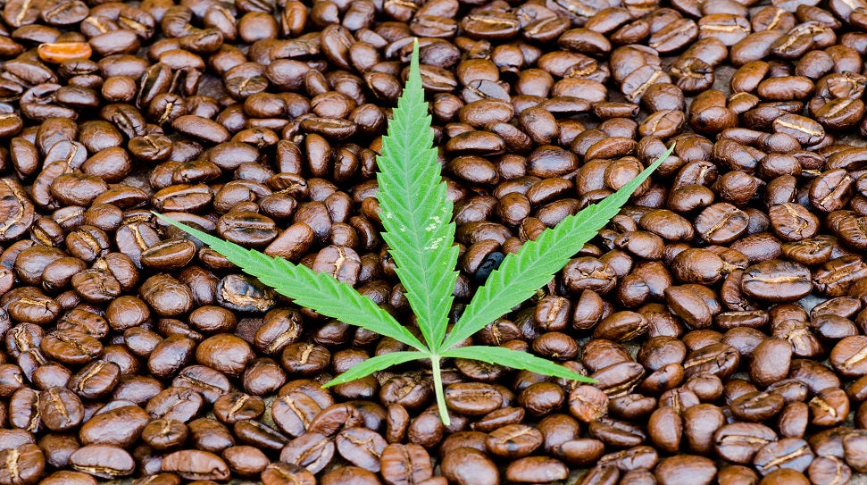 GREEN FLOWER MEDIA: 3 Reasons Why CBD-Infused Coffee Is Amazing