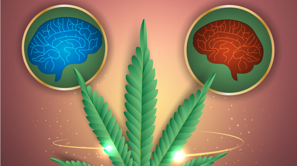 Phytocannabinoids: 25 Things to Know Now