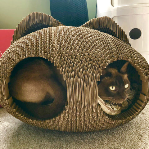 Cat Cocoon Modnpod Customer photo