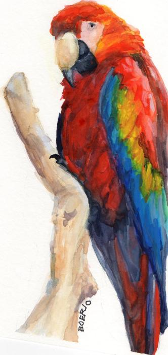 Portrait of a macaw (6x9