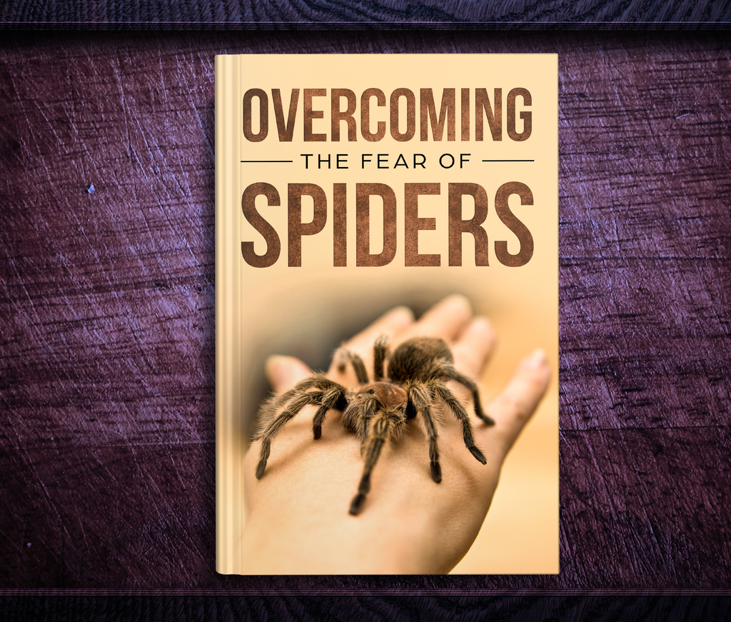 Overcoming Your Fear Of Spiders