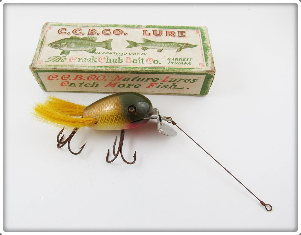 CCBC Golden Shiner Dingbat In Correct Box 5104