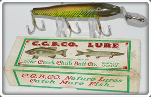 Creek Chub Golden Shiner Pikie In Correct Box