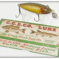 Vintage CCBCO Creek Chub Golden Shiner Baby Wiggler Lure In Box 204
