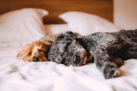 picture showing dogs sleeping