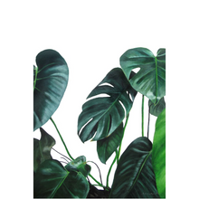 Birdie the Split Leaf Philodendron on Canvas Posters