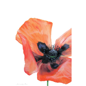 Elm's Poppy on Canvas Posters