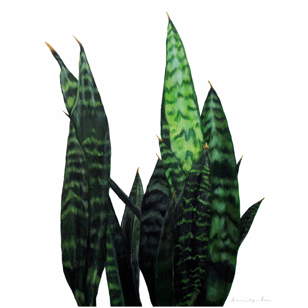 Howie the Snake Plant on Canvas Posters