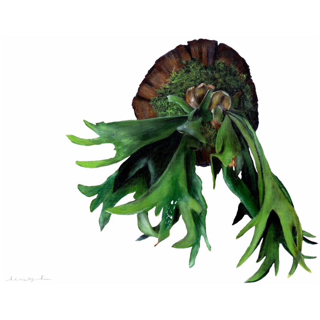 Mossiman the Staghorn Fern on Canvas Posters