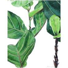 Betty the Fiddle Leaf Fig on Canvas Posters