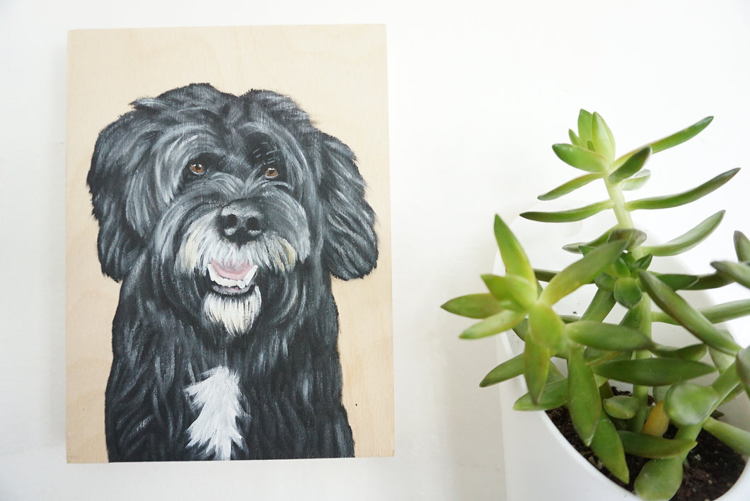 Fig the Portuguese Water Dog
