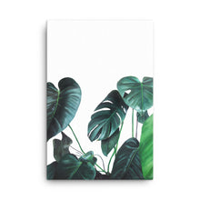 BIRDIE the MONSTERA