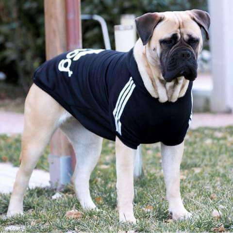 Stylish Jacket with Hoodie for Large Dogs - www.peterspetsupplies.com
