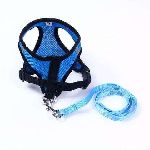 Image of Cute Harness & Leash Set for Small Dogs - www.peterspetsupplies.com