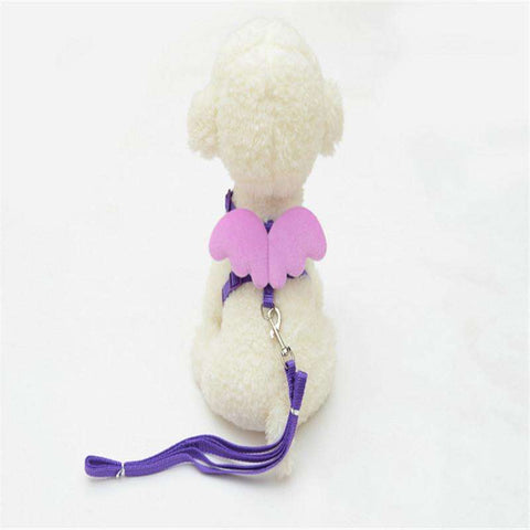 Collar and Leash with Adjustable Wings for Small Dogs - www.peterspetsupplies.com