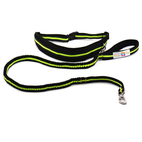 Image of Dolce Pet Hands Free Reflective Dog Leash - www.peterspetsupplies.com