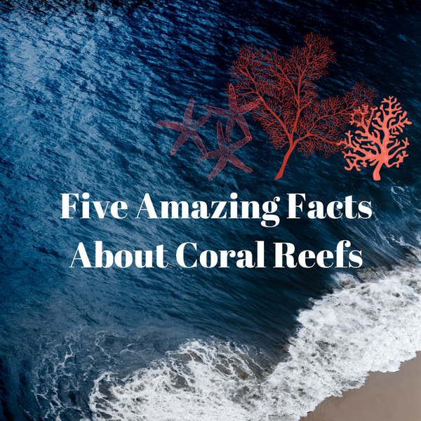 Five amazing facts about coral reefs